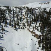 The Hippie Trees Skiers Left